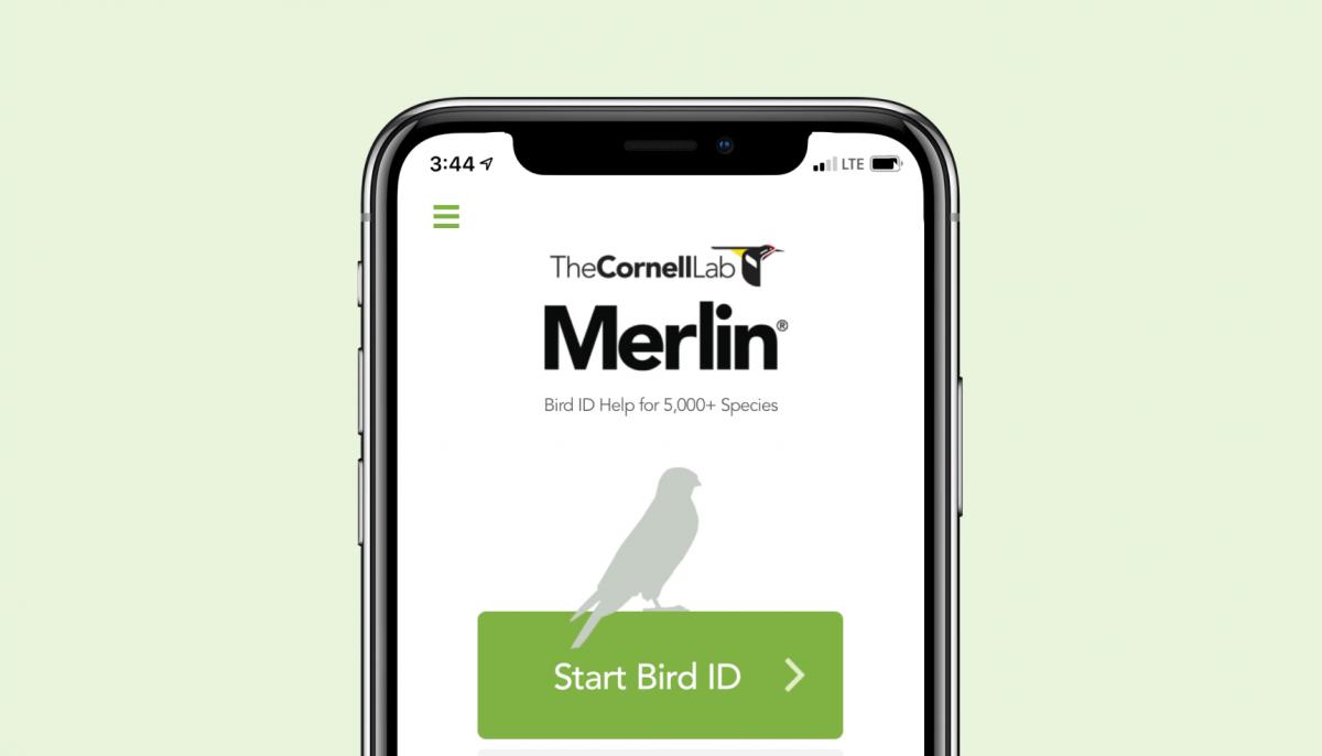 Merlin%20Bird%20ID